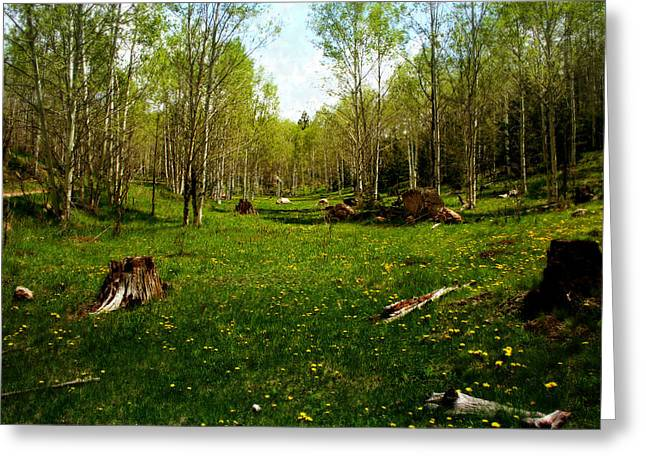 Green Foliage Greeting Cards - Springtime in the High Country Greeting Card by Ellen Heaverlo