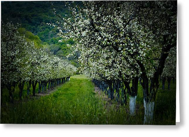 Springtime In The Orchard II Greeting Card by Bill Gallagher