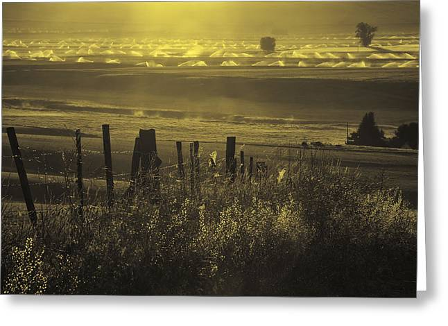 Barbed Wire Fence Greeting Cards - Sprinklers at Sunrise in the Wallowa Valley Greeting Card by Alvin Kroon