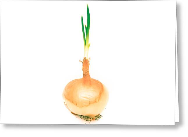 Alliums Greeting Cards - Sprouting onion Greeting Card by Tom Gowanlock