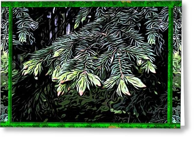 Pine Needles Greeting Cards - Spruce Greeting Card by Ron Bissett