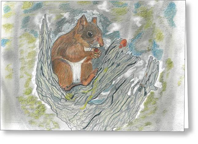 Squirrel Drawings Greeting Cards - Squirrel Greeting Card by Don  Gallacher