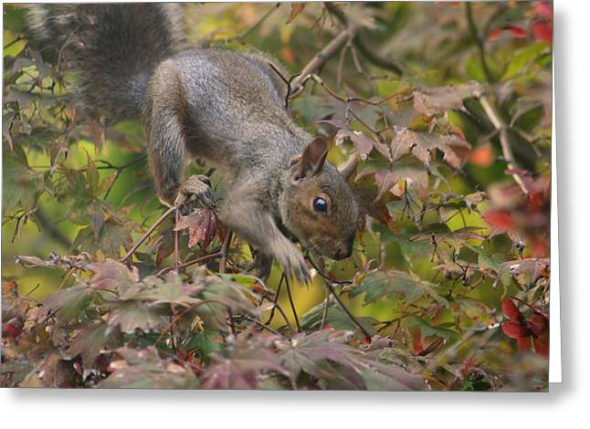 Wild Life Pyrography Greeting Cards - Squirrel In Fall Greeting Card by Valia Bradshaw