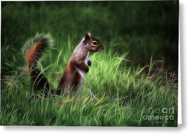 Danuta Bennett Photographs And Art Greeting Cards - Squirrel in Magical Garden Greeting Card by Danuta Bennett
