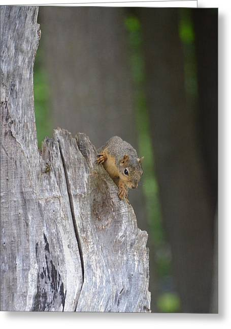 Fox Squirrel Greeting Cards - Squirrel on stump Greeting Card by Linda Larson