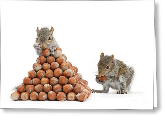 Sciurus Carolinensis Greeting Cards - Squirrels And Nut Pyramid Greeting Card by Mark Taylor