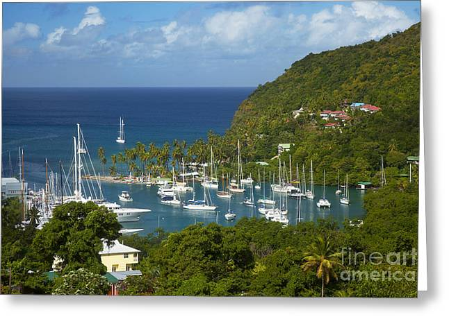 Branch Hill Greeting Cards - St Lucia Greeting Card by Brian Jannsen