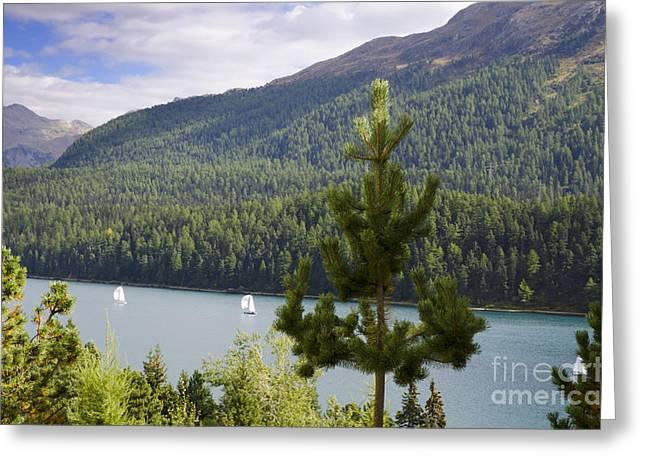 Moritz Greeting Cards - St Moritz lake Greeting Card by Mats Silvan