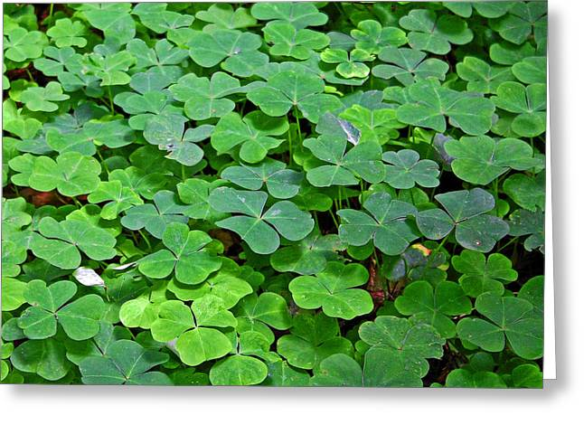 Symbols Greeting Cards - St Patricks Day Shamrocks - First green of spring Greeting Card by Christine Till