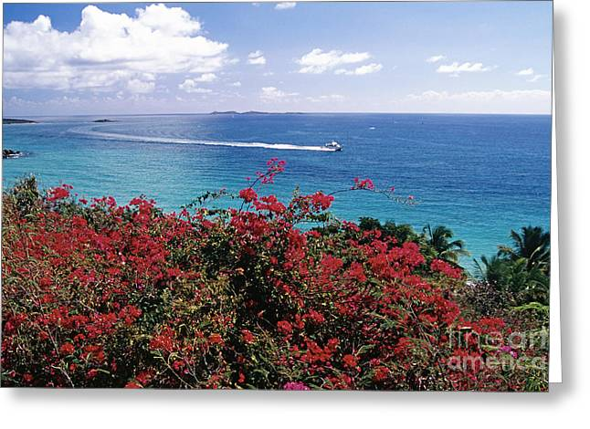 Ocean Panorama Greeting Cards - St Thomas Coastal Panorama Greeting Card by George Oze