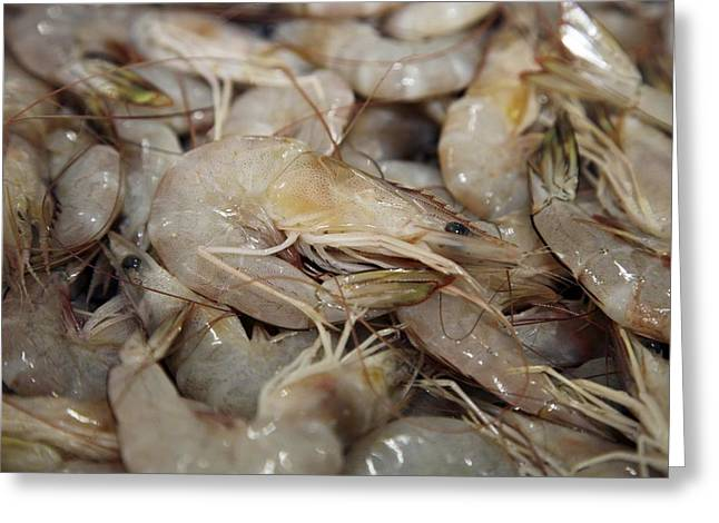 Pisciculture Greeting Cards - Stack Of Shrimps In Market Greeting Card by Bjorn Svensson
