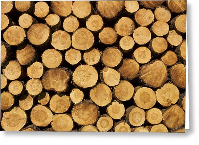Entire Greeting Cards - Stack of wood logs. Greeting Card by Bernard Jaubert