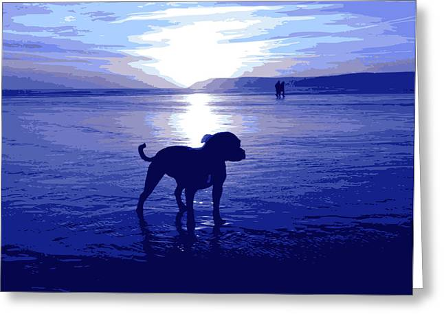 Bull Terrier Greeting Cards - Staffordshire Bull Terrier on Beach Greeting Card by Michael Tompsett