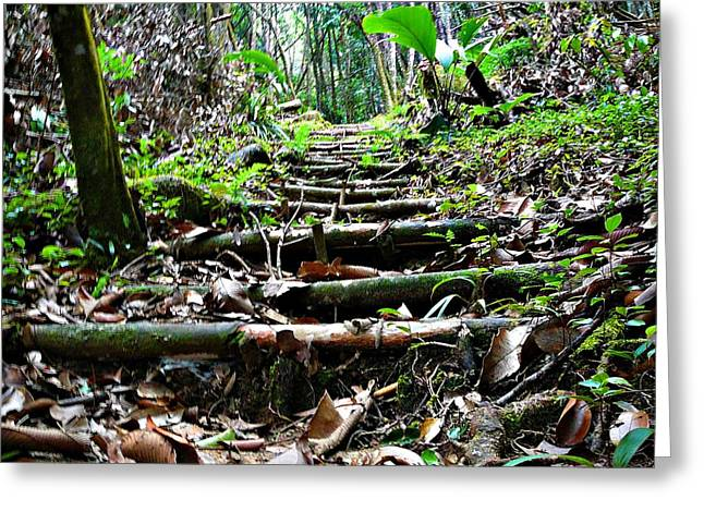 Jenny Senra Pampin Greeting Cards - Stairs In The Forest Greeting Card by Jenny Senra Pampin