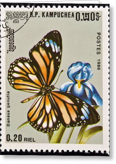 Danaus Genutia Greeting Cards - Stamp. Butterfly on flower. Greeting Card by Fernando Barozza