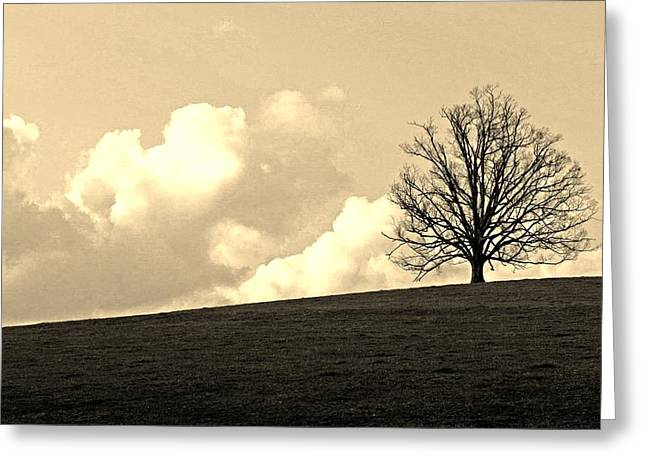 Beautiful Greeting Cards - Stand alone tree 2 Greeting Card by Sumit Mehndiratta