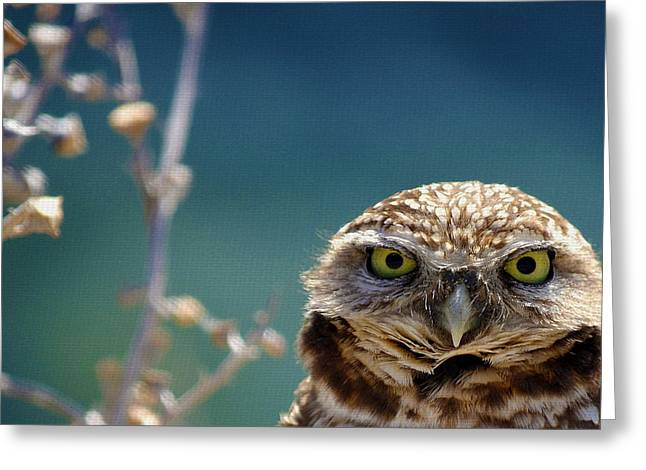 Owls Greeting Cards - Standing My Ground Deux Greeting Card by Fraida Gutovich