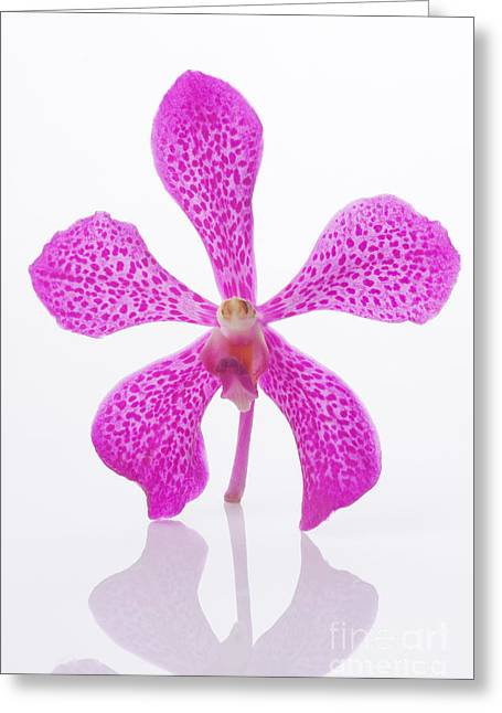 Soft Head Greeting Cards - Standing Orchid Head Greeting Card by Atiketta Sangasaeng