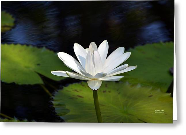 Noticeable Greeting Cards - Standing Out Greeting Card by Maria Urso