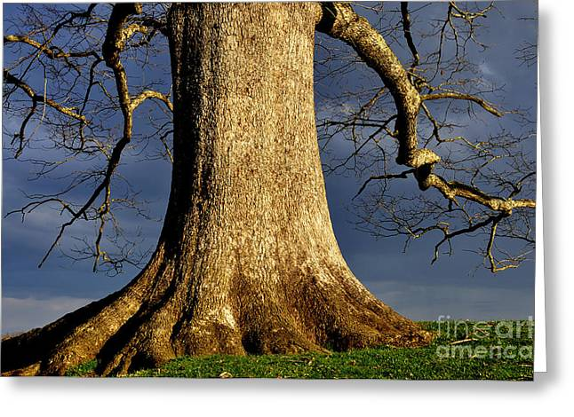 Dark Skies Greeting Cards - Standing Strong Oak Tree and Storm Clouds Greeting Card by Thomas R Fletcher