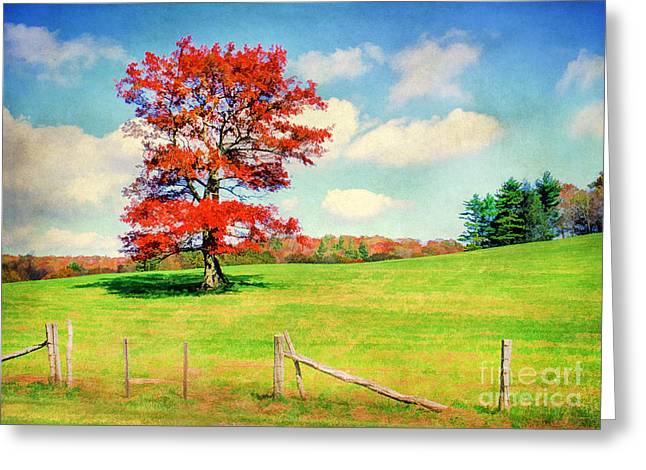 Big Red One Greeting Cards - Standing Tall Greeting Card by Darren Fisher