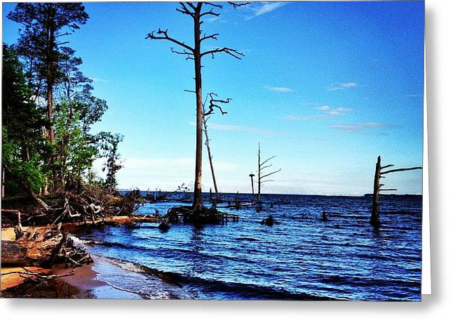 Fishing Creek Greeting Cards - Standing Tall Goose Creek State Park Greeting Card by Joan Meyland