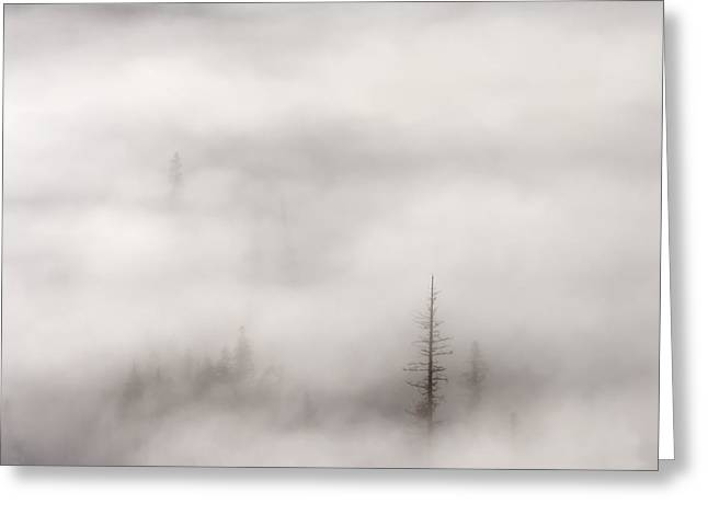 Fog Rising Greeting Cards - Standing Tall Greeting Card by Mike  Dawson
