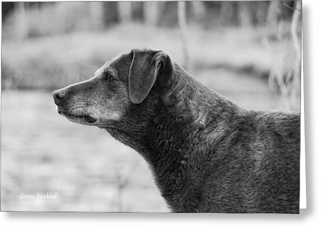Watch Dog Greeting Cards - Standing Watch Greeting Card by Donna Blackhall