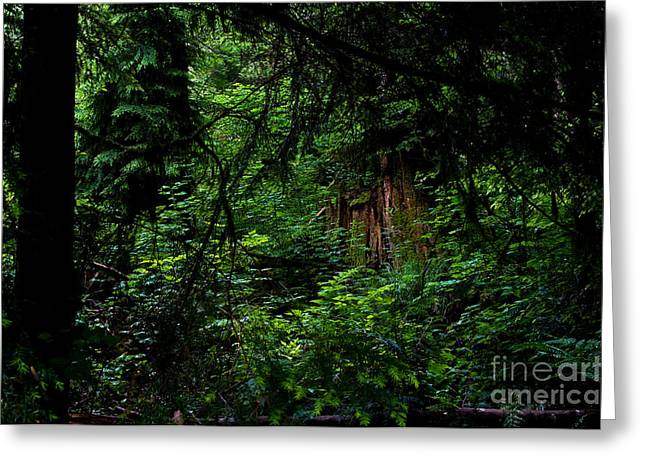 Stanley Park Trees 3 Greeting Card by Terry Elniski