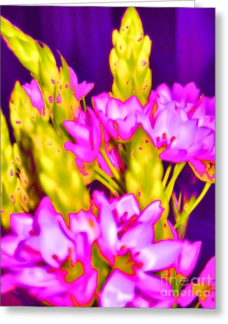 Star Of Bethlehem Greeting Cards - Star of Bethlehem  Greeting Card by Mira Dimitrijevic
