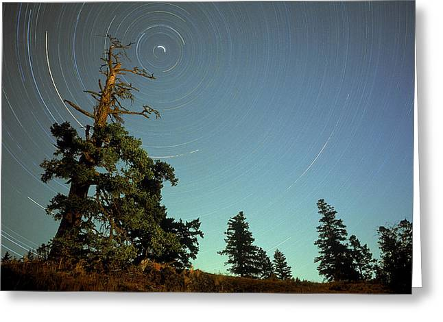 Douglas Fir Trees Greeting Cards - Star Trails, North Star And Old Douglas Greeting Card by David Nunuk