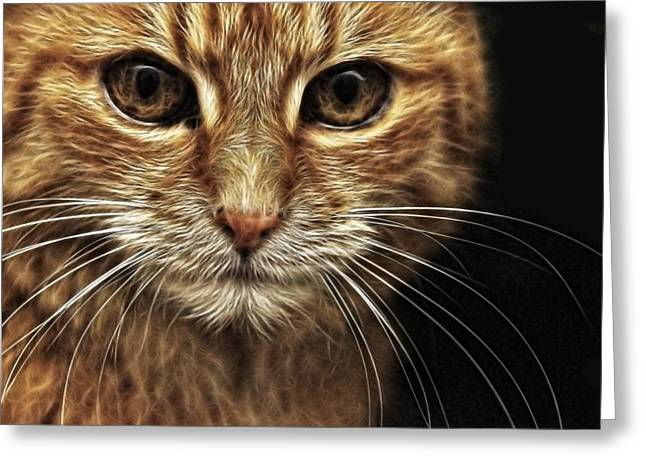 Kitten Prints Greeting Cards - Stare Greeting Card by Tilly Williams