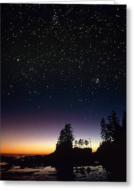 Perseus Greeting Cards - Starfield Over A Group Of Coastal Trees Greeting Card by David Nunuk