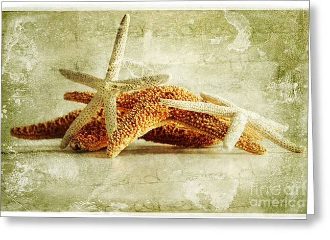 Shell Texture Greeting Cards - Starfish Greeting Card by HD Connelly