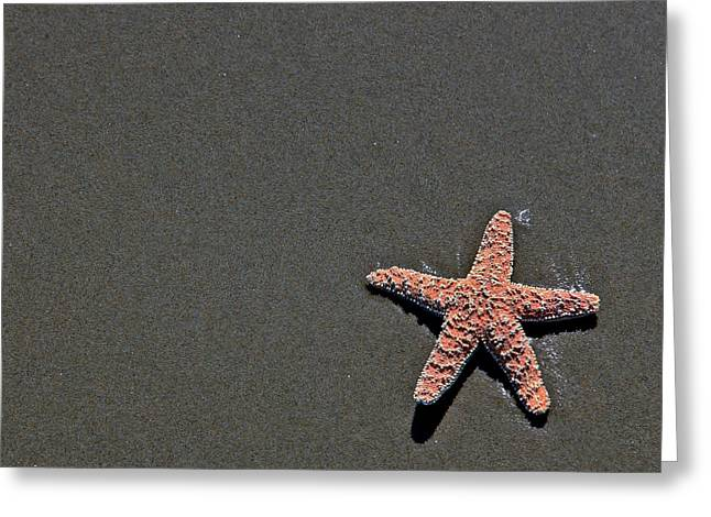 Ocean Art Photos Greeting Cards - Starfish In The Sand Greeting Card by Athena Mckinzie