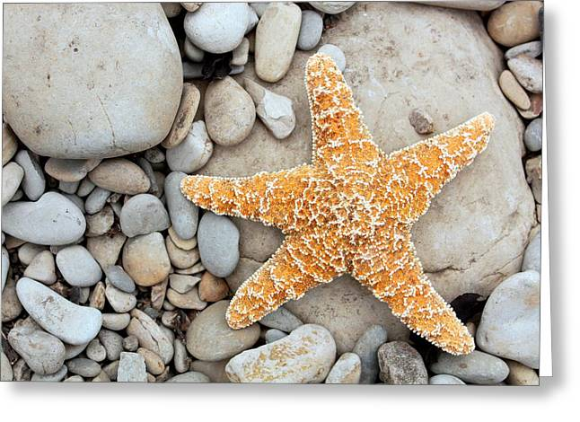 Biology Greeting Cards - Starfish On A Beach Greeting Card by Tony Craddock