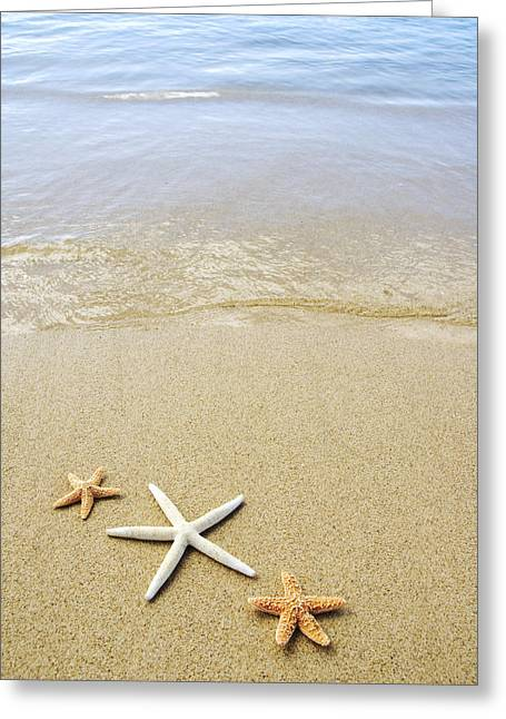 Asteroidea Greeting Cards - Starfish on Beach Greeting Card by Mary Van de Ven - Printscapes