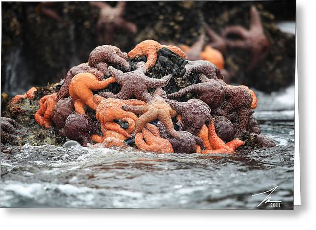 Ventura California Greeting Cards - Starfish Rock Greeting Card by Steve Munch