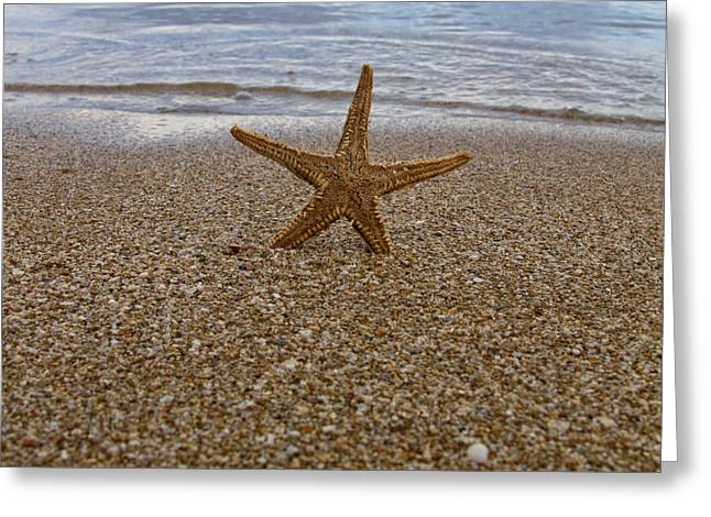 Sand Patterns Greeting Cards - Starfish Greeting Card by Stylianos Kleanthous