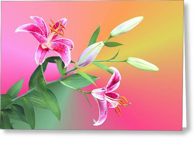 Stargazer Lily Greeting Cards - Stargazer Lilies Greeting Card by Kristin Elmquist