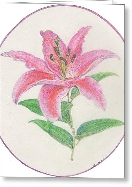Pink Blossoms Drawings Greeting Cards - Stargazer Lily Greeting Card by Joanna Aud