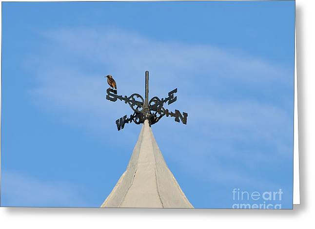 Wind Vane Greeting Cards - Staring Southward Greeting Card by Al Powell Photography USA