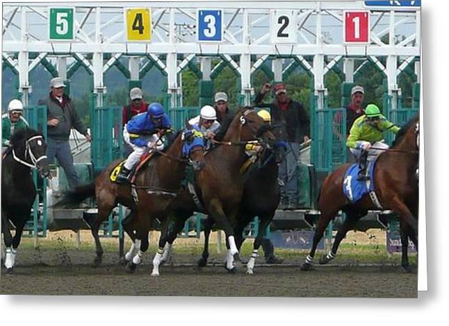 Race Horse Greeting Cards - Starting Gate Greeting Card by Lori Seaman