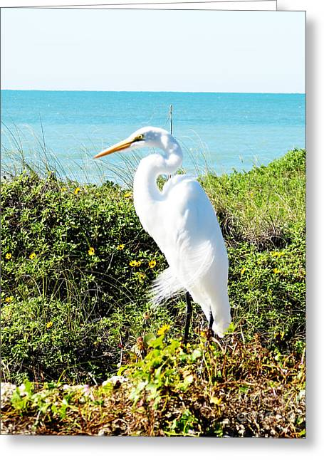 In My Life Greeting Cards - Statuesque Heron Vanilla Pop Greeting Card by Chris Andruskiewicz