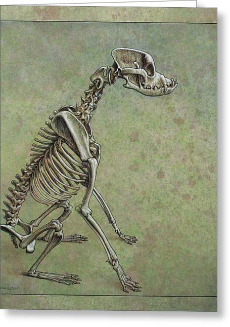 Animals Drawings Greeting Cards - Stay... Greeting Card by James W Johnson
