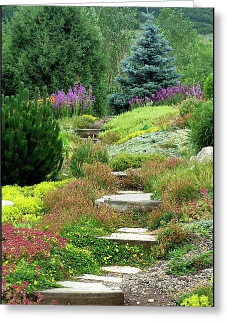Purple Phlox Greeting Cards - Steamboat Garden Path Greeting Card by Peggy Dietz
