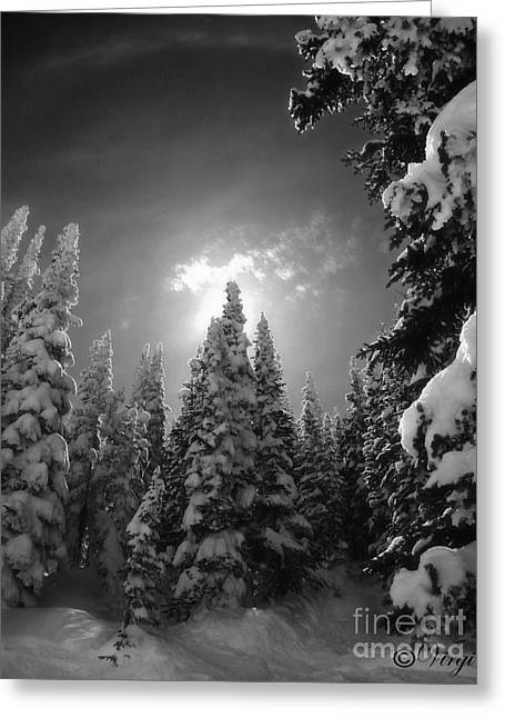 Skiing Art Prints Greeting Cards - Steamboat Springs Back Country Greeting Card by Virginia Furness