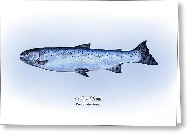 Trout Fishing Drawings Greeting Cards - Steelhead Trout Greeting Card by Ralph Martens