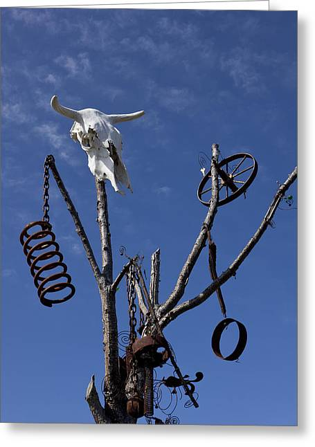 Steer Photographs Greeting Cards - Steer skull in tree Greeting Card by Garry Gay