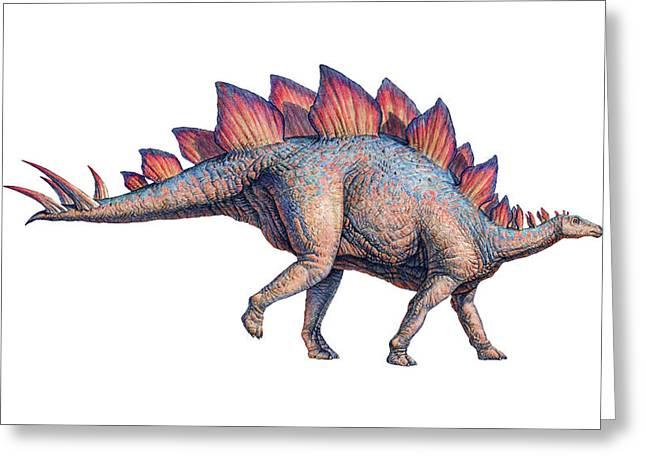 Stegosaurus Greeting Cards - Stegosaurus Dinosaur Greeting Card by Joe Tucciarone
